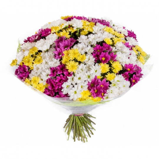 White, yellow and purple chrysanthemums (35 pcs)