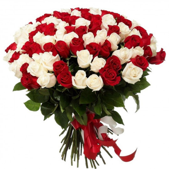 101 Red and White Rose 70 cm